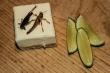 Šach Mat - hmyz na talíři